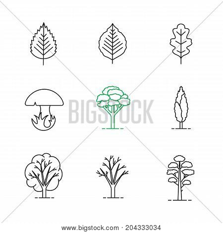 Trees linear icons set. Poplar, birch, oak leaves and trees, mushroom, pine. Thin line contour symbols. Isolated vector outline illustrations