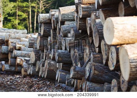 Stacks of wooden logs in a lumber yard.