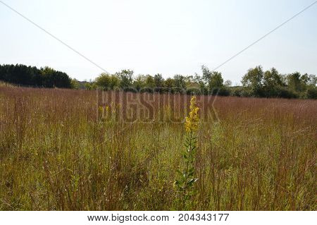 A prairie landscape during the early autumn