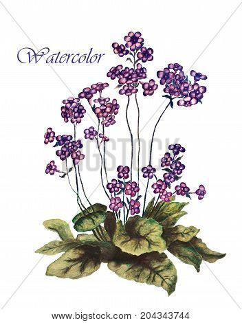 Elegance illustration with forget-me-not flowers bouquet. watercolor illustration for background