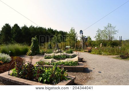 Vegetable beds in the community garden during autumn