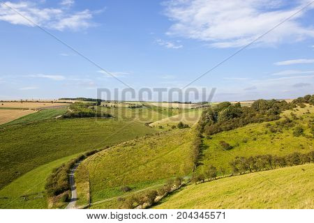 Wooded Valley With Road