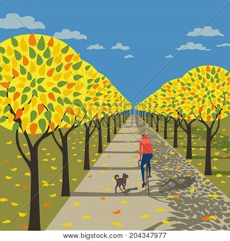 Autumn fall in city outdoor poster. Sports, autumnal park alley. Bicyclist riding bicycle. Running pet dog on fallen leaves.