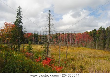 Marshlands in Vermont, United States, in fall