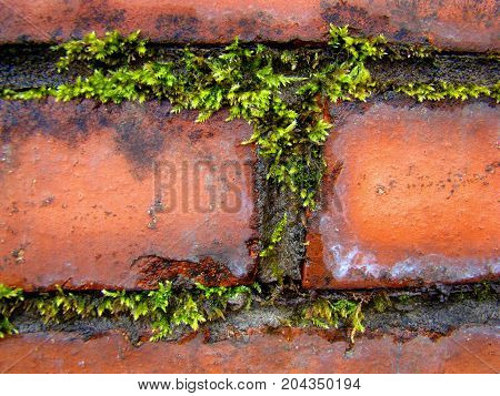 Contrast of green and red: the grass grows old brick wall.