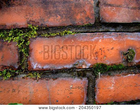 Contrast of green and red: the grass grows from an old brick wall.