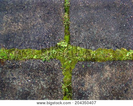 Contrast of green and gray: the grass grows from the old sidewalk in the form of a cross.