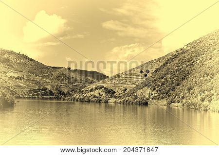 Vineyards on the Banks of the River Douro in Portugal Stylized Photo