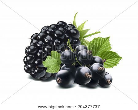 Black currant berry composition isolated on white