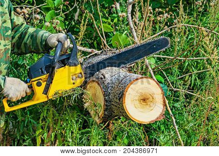 Worker lumberjack a chainsaw sawing a tree trunk in deciduous forest