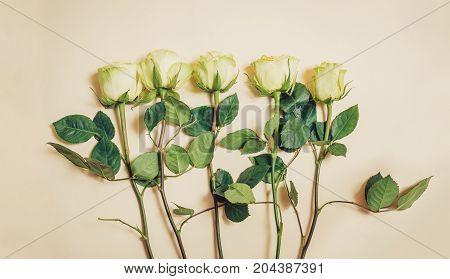 Beautiful roses on beige background. Vintage style