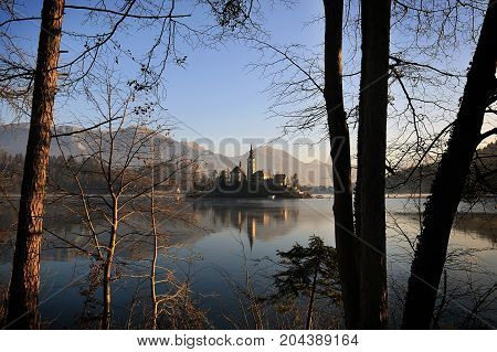 The island of Bled with the Assumption church among tree branches.