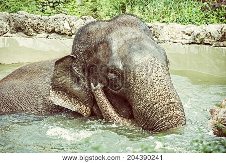Elephant taking a refreshing dip in the water. Animal theme. Funny photo. Beauty photo filter.