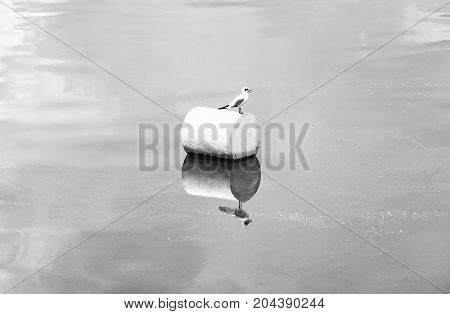 The seagull on the buoy. Natural scene. Black and white photo.