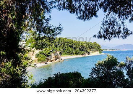 View through silhouetted frame made of conifer canopy on seashore.