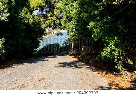 Way through silhouetted frame made of conifer canopy on seashore.