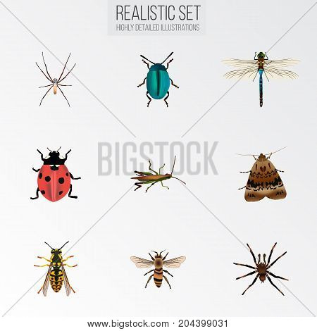 Realistic Butterfly, Bee, Locust And Other Vector Elements