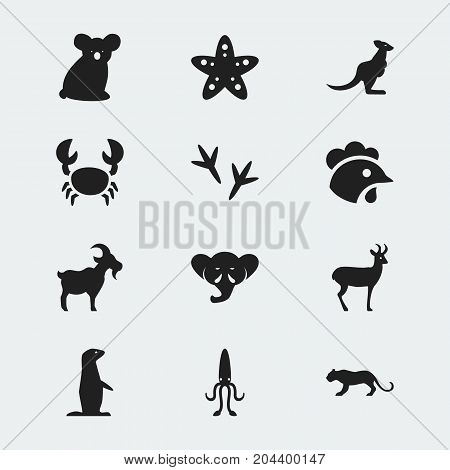 Set Of 12 Editable Zoo Icons. Includes Symbols Such As Reindeer, Groundhog, Australian Bear And More