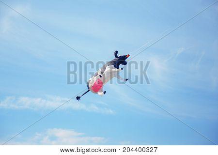 black white air cow kite flying in the sky. Kite festival