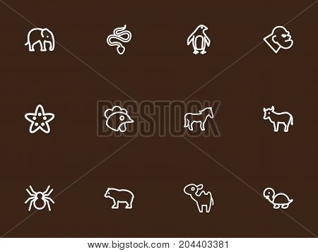 Set Of 12 Editable Zoo Outline Icons. Includes Symbols Such As Kine, Spinner, Diver And More