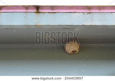 Tiny paper wasp nest attached to the eave of an old house, horizontal view