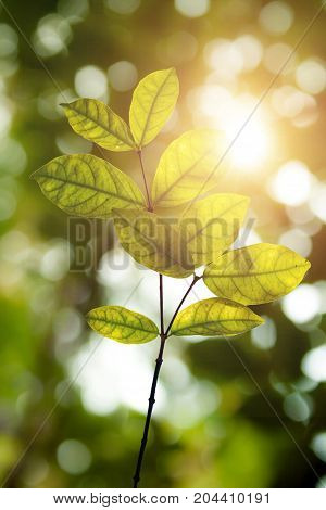 Green leaves under sunlight (Concept of environment)