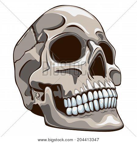 Vector of human skull on white background