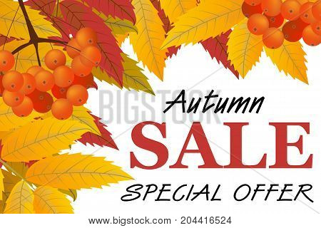Autumn background with branch of rowan berries leaves and sign sale. Frame fall. Vector illustration.