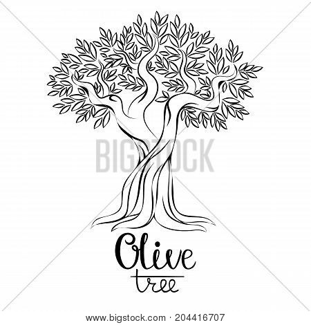 Olive tree vector illustration. Olive oil. Vector olive tree for labels, pack. Hand drawn olive tree vector illustration. Olive tree contour image.