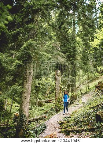 Hiker woman going in mountains forest and big trees
