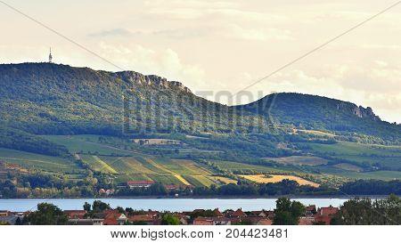Vineyards At Sunset In Autumn Harvest. Ripe Grapes.wine Region, Southern Moravia - Czech Republic. V