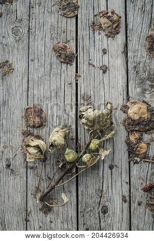 some rotten figs on a wooden background