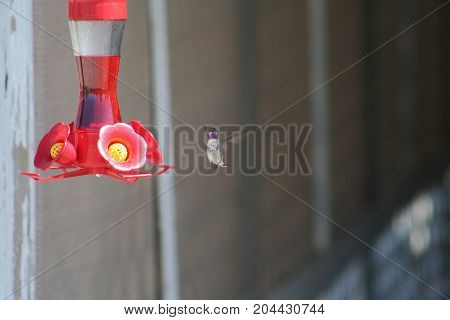 Humming bird caught posing for picture while collecting nectar