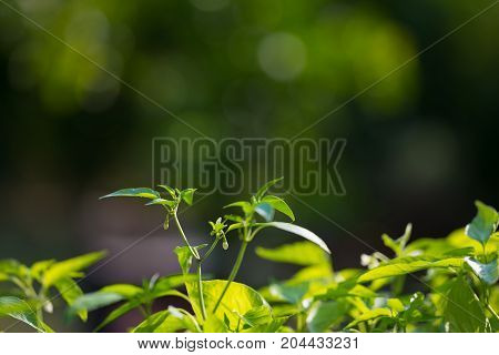 Plant Nursery And Organic Vegetable Garden For Healthy Eating. Selective Focus On Young Lush Green L