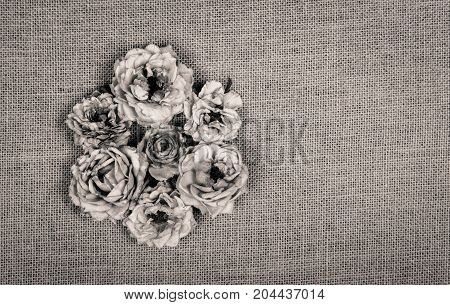 Dry wilted roses on a natural linen background. Monochrome