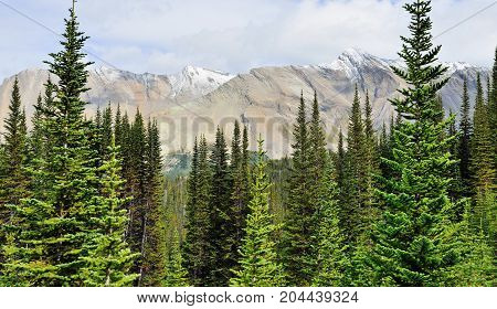 High Mountains And Alpine Forest Of The Canadian Rockies Along The Icefields Parkway Between Banff A