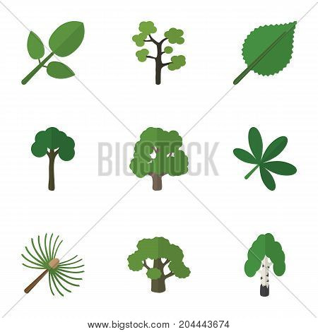 Flat Icon Natural Set Of Decoration Tree, Linden, Rosemary And Other Vector Objects