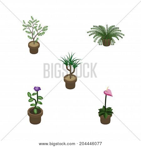 Isometric Houseplant Set Of Fern, Plant, Grower And Other Vector Objects