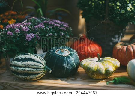 Se pumpkins of various form type color and size are laying on wooden shelve near zucchini among flowers in baskets after autumn harvesting shallow depth of field sunny autumn day