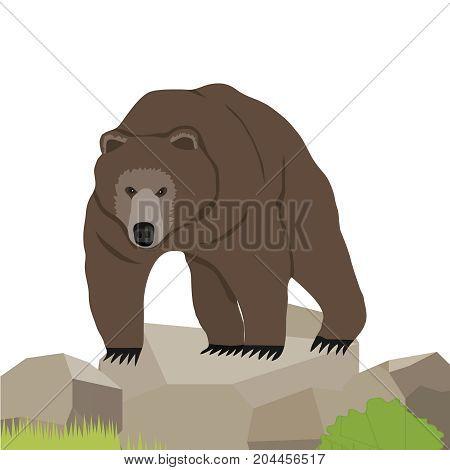 Bear a realistic bear on the stone. Flat design vector illustration vector.