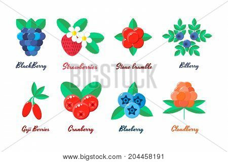 vector illustration. set berries. strawberries, blueberries, blueberries, blackberries Goji berry stone bramble bilberry cloudberry