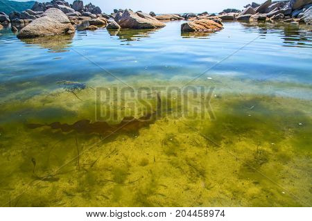 beautiful underwater world, many fish swims in clear water. There are algae