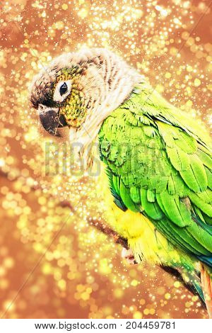 Beautiful colorful parrot with shimmering background. Beauty in nature. Photo filter.