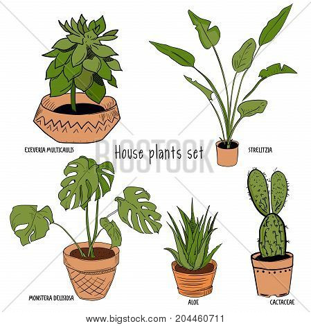 Color houseplants Vector set of hand drawing