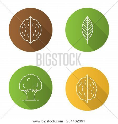 Forestry flat linear long shadow icons set. Walnut leaf, oak tree, nuts. Vector outline illustration