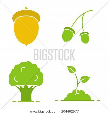 Forestry glyph color icon set. Oak tree and fruit, growing sprout. Silhouette symbols on white backgrounds. Negative space. Vector illustrations