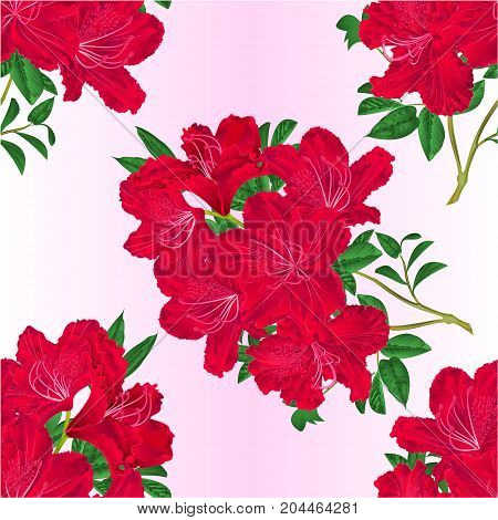 Seamless texture twig red rhododendron flowers and leaves vintage botanical vector editable illustration hand draw