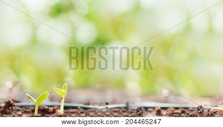 Young Plant Growing with bokeh background shallow DOF