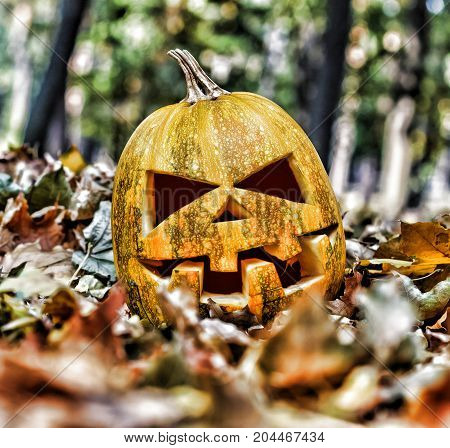 Halloween. halloween jack-o-lantern on autumn leaves like a human skull on the leaves in the forest.