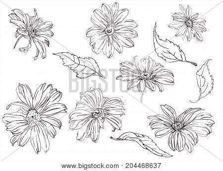 Collection of hand drawn Summer flowers chamomile